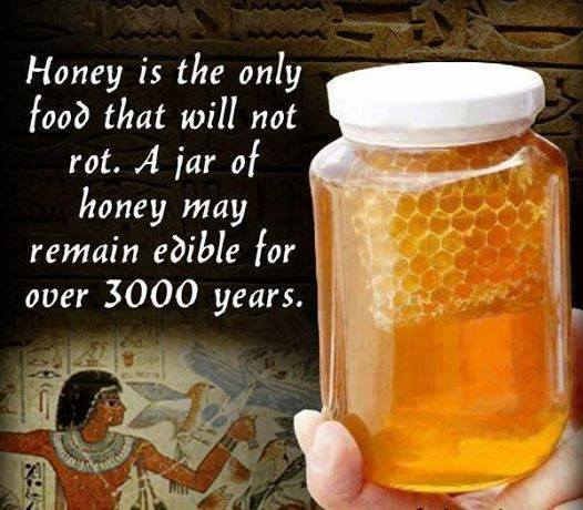 interesting facts, did you know, honey facts