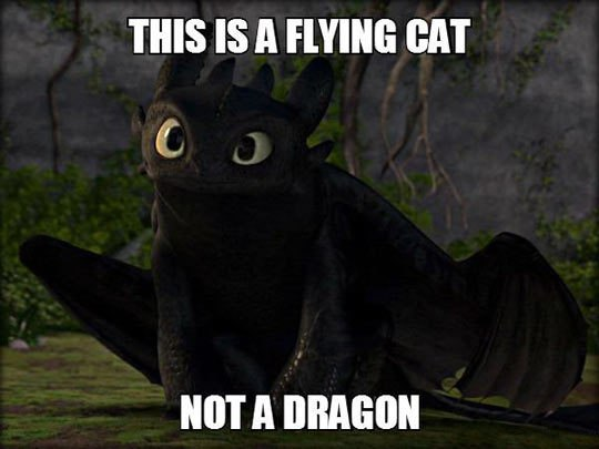 funny pics, lol pics, flying cat
