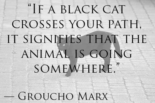 funny pics, lol pics, black cat humor