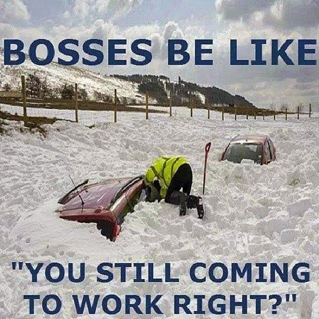 funny pics, lol pics, bosses be like