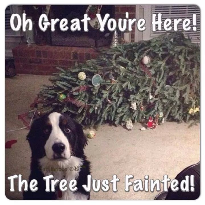 funny pics, lol pics, dogs humor, Christmas tree