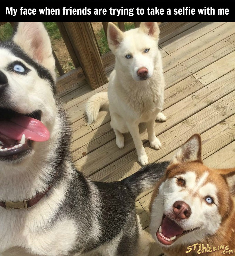 funny pics, lol, funny dogs, selfie humor