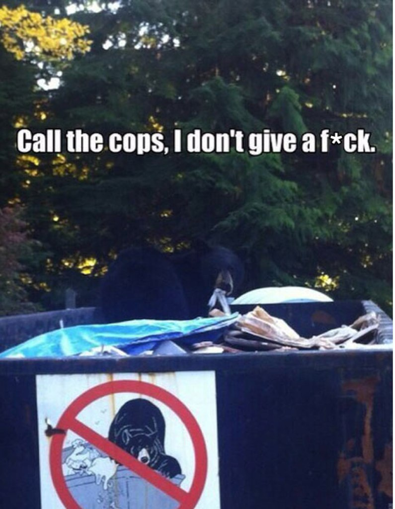 funny signs, funny pics, lol pics, breaking the rules, bear,