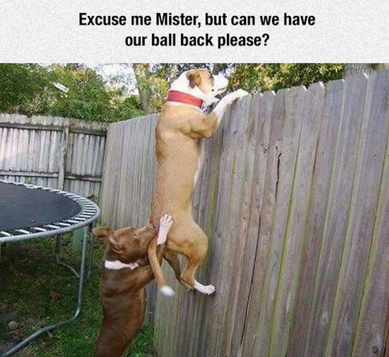 funny dogs, lol pics