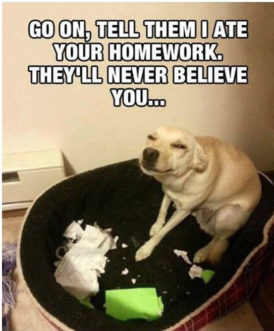 funny dogs, lol pics, funny