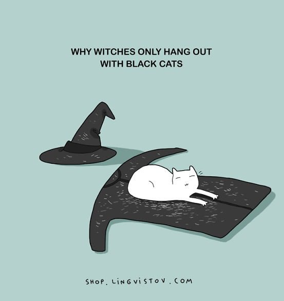 funny pics, lol pics, white cats, witches humor