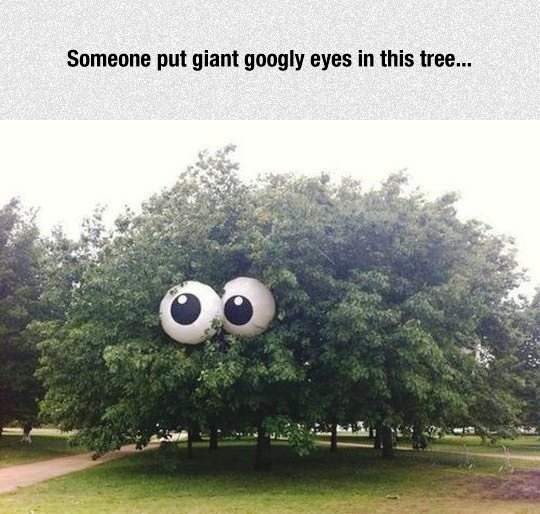 funny pics, lol, googlie eyes, googly eyes