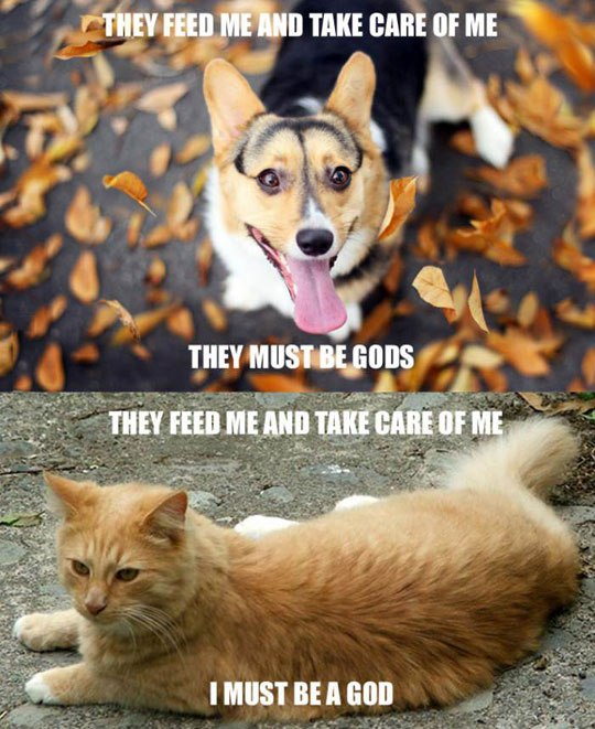 Dogs Vs Cats Logic, dogs vs cats, funny pics, lol pics, cats be like