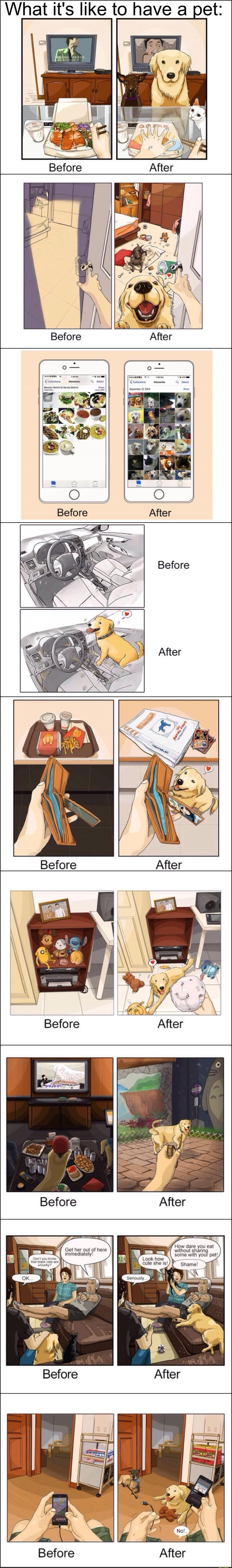 Before and After Having Dog