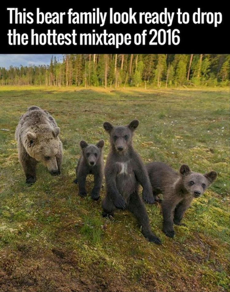 funny pics, lol pics, funny animals, bear family, cute