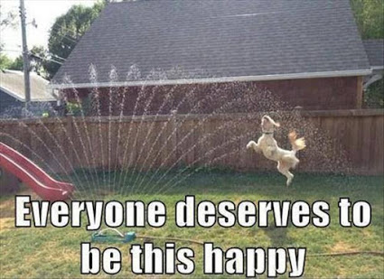 Everyone Deserve This Happiness