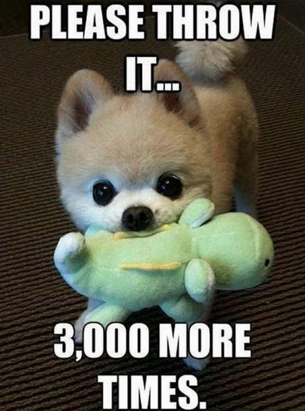 funny pics, lol, funny dogs, cute dogs, puppy