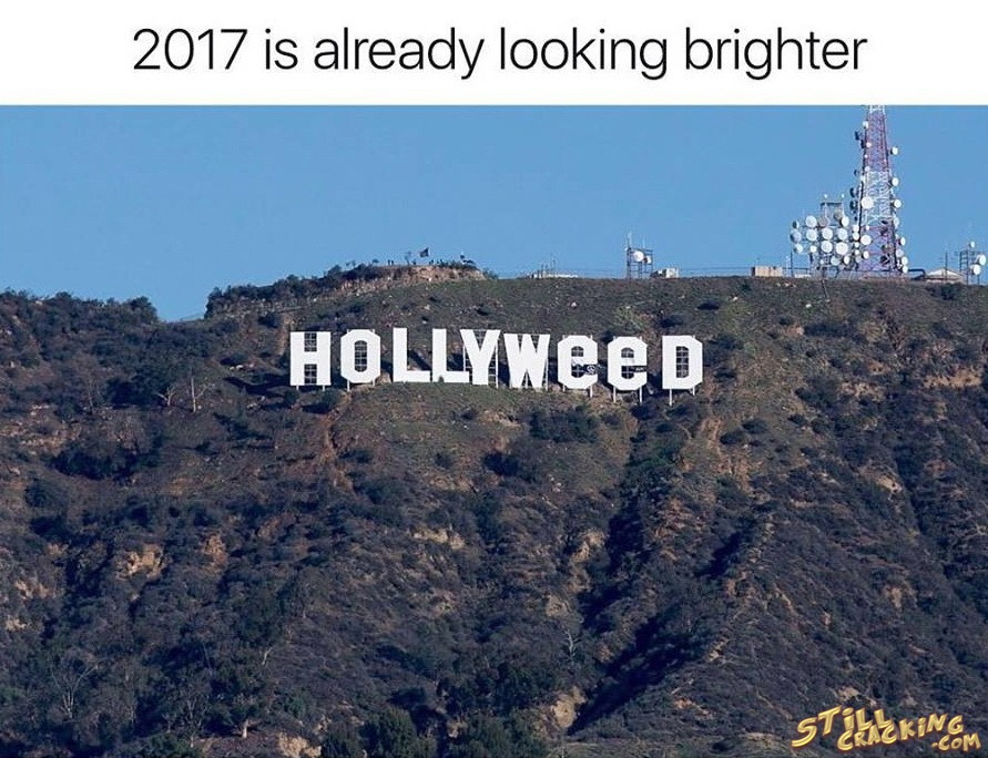 funny pics, lol pics, hollyweed, good start of 2017