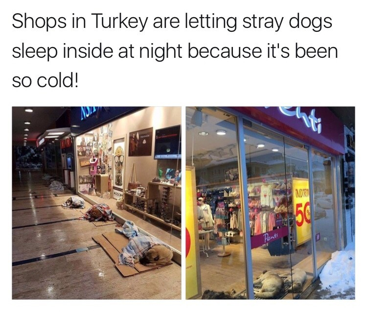 turkey shops