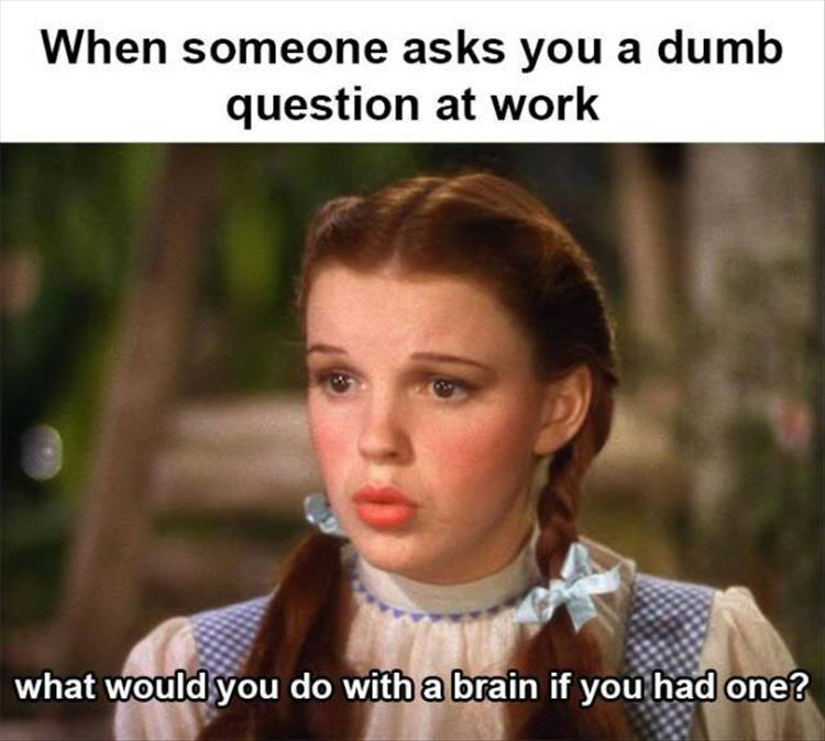 funny pics, lol pics, lol, dumb question, work humor