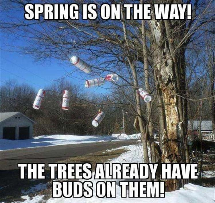 funny pics, lol pics, buds on the trees, spring jokes