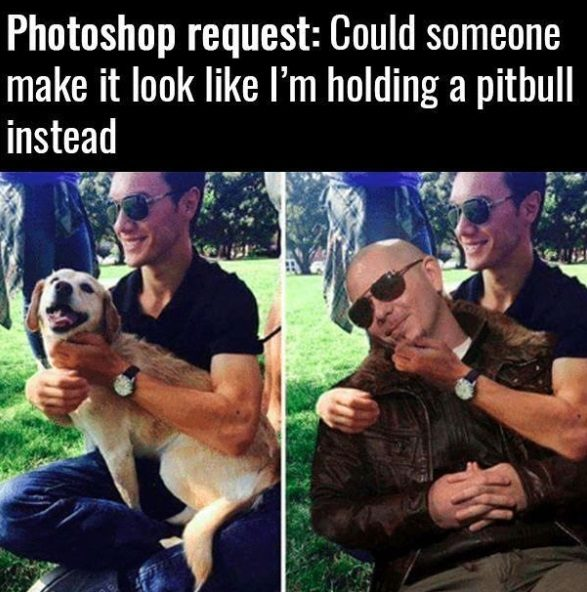 funny pics, lol pics, photoshop request, pitbull humor