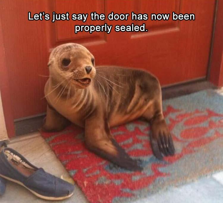 funny pics, lol, words play, cute animals, seal