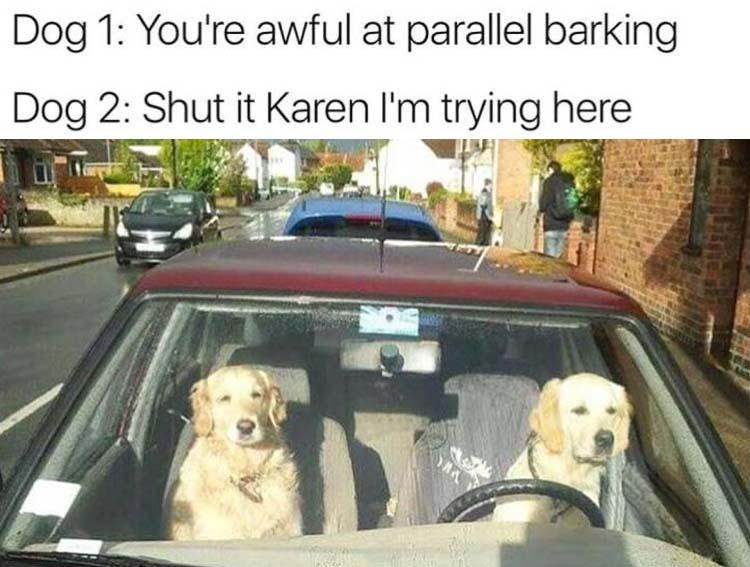 funny pics, lol pics, funny dogs, dogs driving, parallel barking
