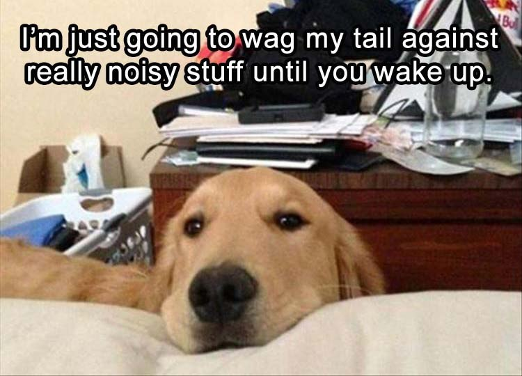 funny pics, dogs be like, funny dogs, adorable
