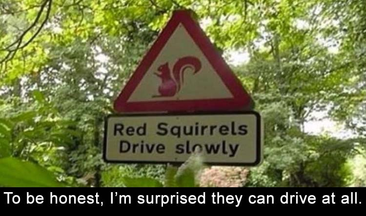 funny signs, lol pics, squirrel's humor, lol