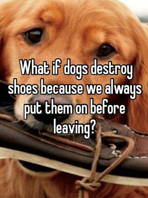 funny facts, dogs humor, funny dogs, lol,