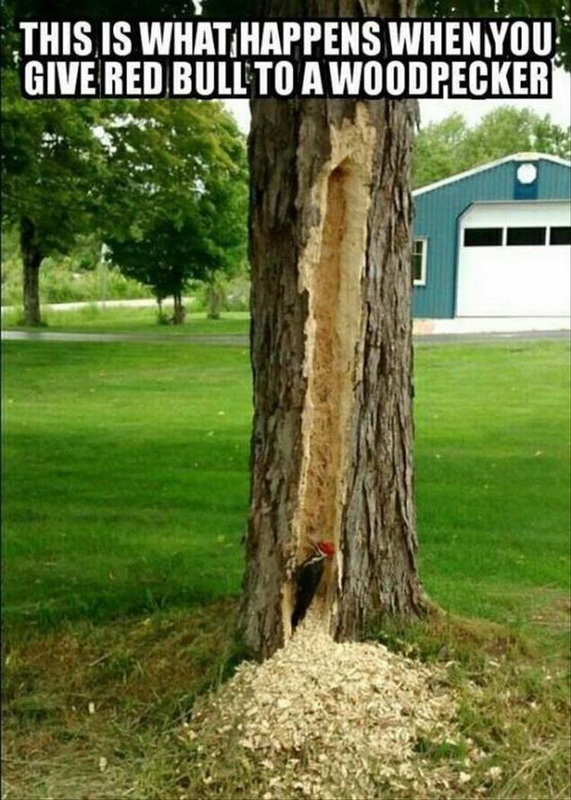 funny pics, lol pics, red bull humor, woodpecker