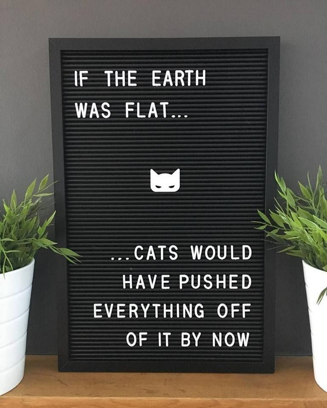 funny cats, Flat Earth jokes, cat jokes, funny pics, lol