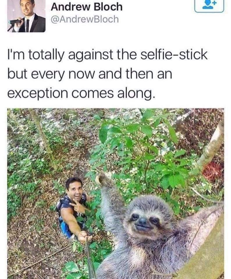 funny animals, lol, selfie stick humor, best selfie,