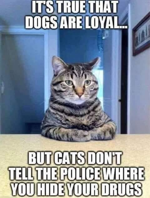 funny pics, lol, cats vs dogs, cats humor