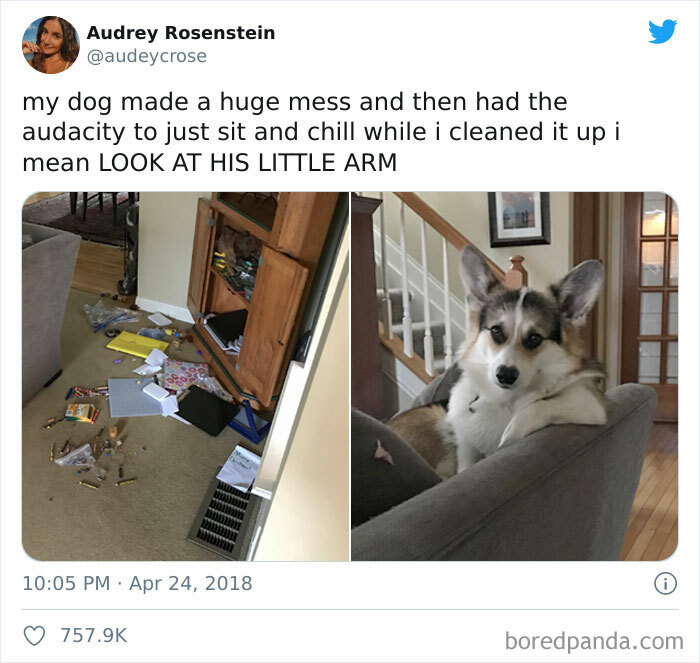 pets-destroying-things
